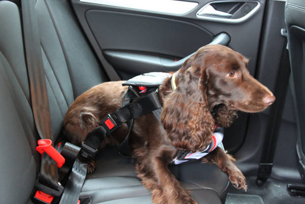 vasta gamma Vendita calda 2019 grande vendita I cani ringraziano, ora possono viaggiare sicuri in auto ...