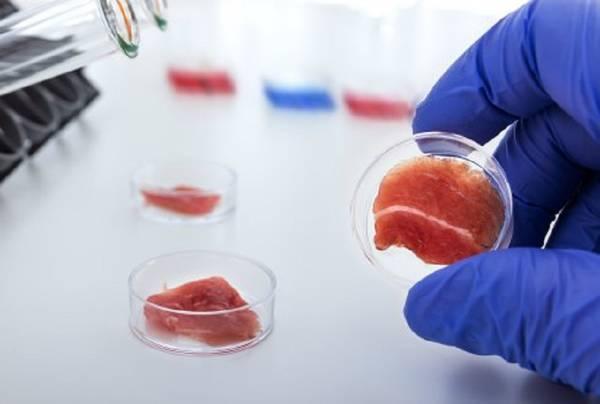 Bistecche 'verdi' dalle cellule staminali