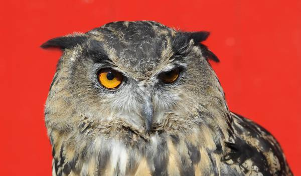Giornata sulla bilancia per gli animali dello zoo natura - Immagini di animali dello zoo per bambini ...