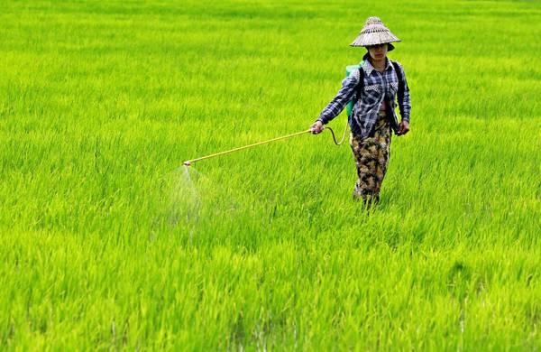 500mln aziende familiari sfamano mondo, danno 80% cibo