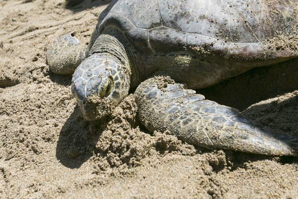 Con mari pi caldi scompaiono tartarughe marine 39 al sole for Temperatura tartarughe