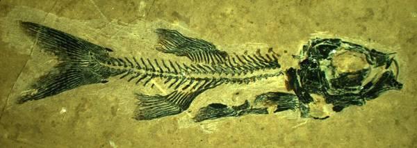 I più antichi pesci volanti per la prima volta in Italia