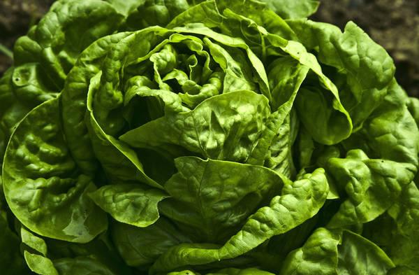 Dietrofront sulla dieta vegetariana, è 'nemica' dell'ambiente (fonte: liz west)