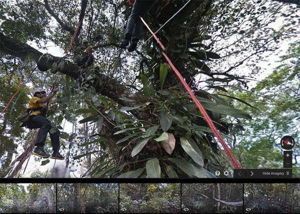 Google Street View esplora la foresta amazzonica