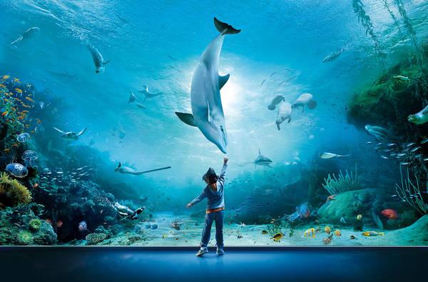 l incontro con i delfini bello