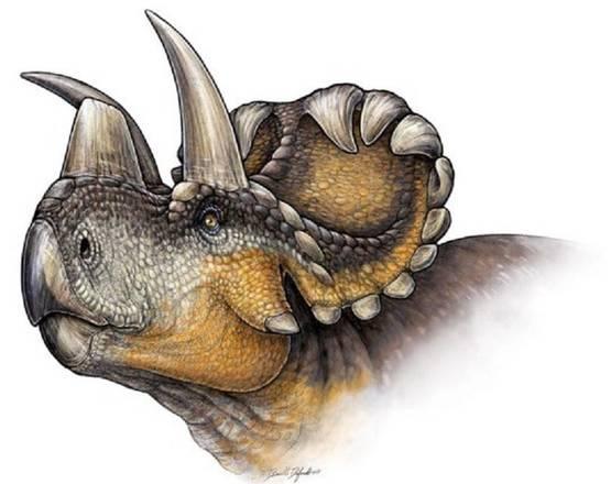 Ricostruzione del muso del wendiceratopo (fonte: Danielle Dufault)