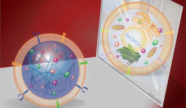 Rappresentazione artistica della cellula staminale sintetica (fonte: Alice Harvey, NC State University)