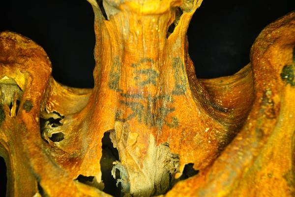 I tatuaggi di fiori e animali scoperti sulla mummia di una donna vissuta nell'antico Egitto. Sul collo  si possono vedere due babbuini con al centro l'Occhio della dea Wadjet (fonte: Anne Austin)
