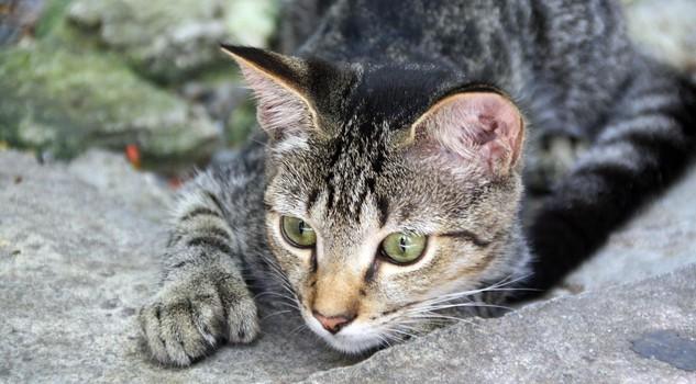 A Key West tra i gatti della casa Museo di Hemingway