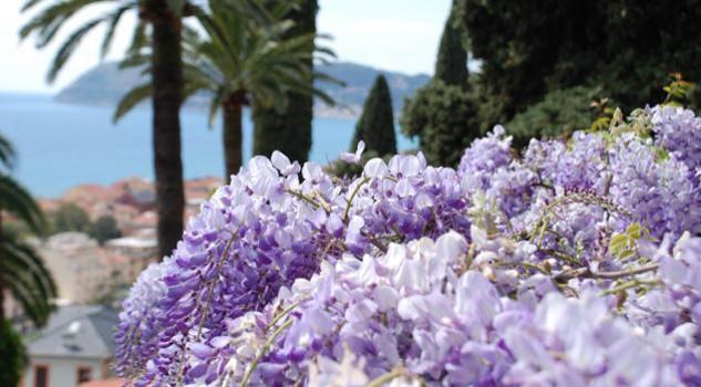 Glicini e agapanti meraviglie dei giardini di villa della - Giardini di marzo collezione ...