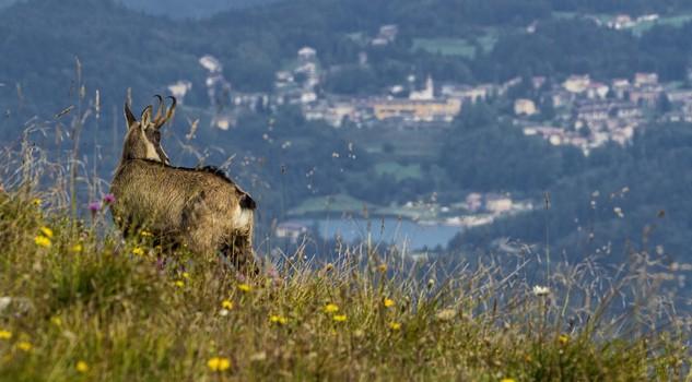 Estate in montagna le 10 regole del piccolo ecologista for Noleggio cabina di lusso in montagna in virginia