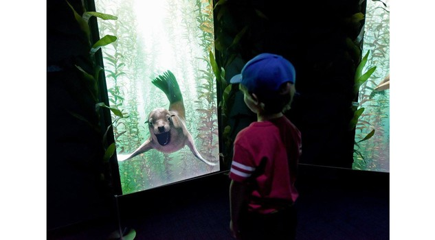 Encounter New York Photo by Diane Bondareff/Invision for National Geographic Encounter/AP Images