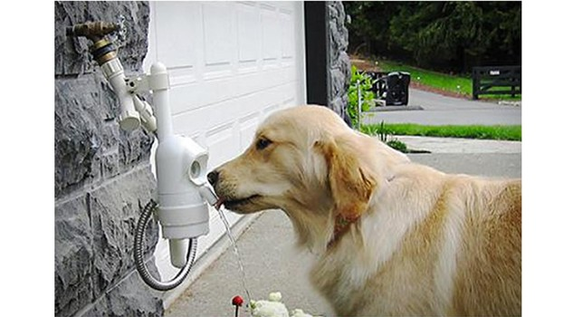 waterdog-automatic-pet-drinking-fountain