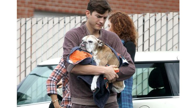 bulldog mania Ashton Kutcher