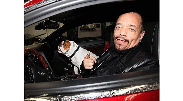 bulldog mania Ice T