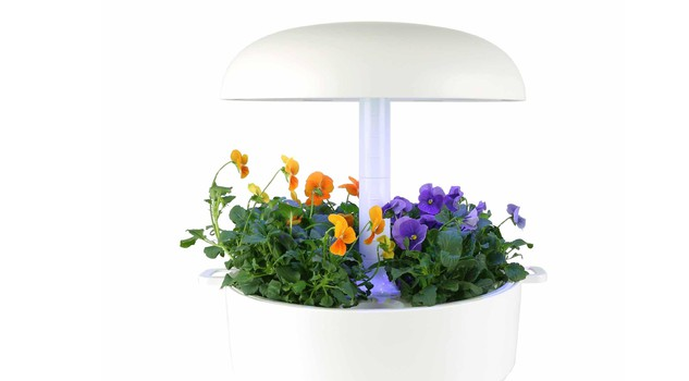 Piante in capsula dalla finlandia lo smart garden da interni