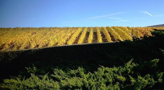 regione Champagne, foto di Nicoletta Diamanti