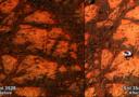 A destra l'immagine della roccia apparsa nella foto del rover Opportunity, a sinistra lo stesso panorama inquadrato qualche giorno prima (fonte: NASA)