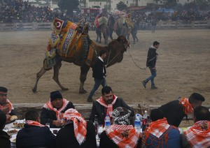 Turkey Camel Wrestling Photo Gallery