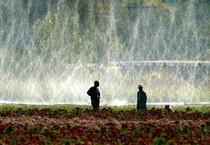 Unicef, 750 milioni persone non hanno acqua potabile (ANSA)