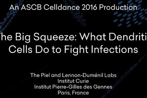 'The Big Squeeze: What Dendritic Cells Do to Fight Infection' (ANSA)