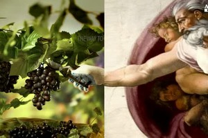 Italian wine, taste the passion (ANSA)