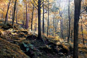 Un bosco in autunno foto Philip Openshaw iStock. (ANSA)