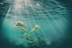 Dalle alghe marine un aiuto per abbassare la glicemia (ANSA)