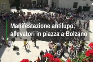 Allevatori in piazza contro i lupi a Bolzano (ANSA)