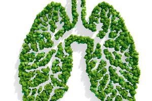 Lo studio è stato supportato da Fondazione Airc per la ricerca sul cancro (ANSA)