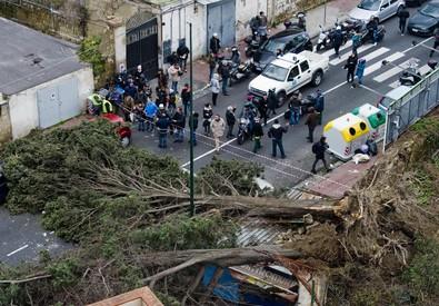 Uno degli alberi caduti in via Manzoni a Napoli (ANSA)