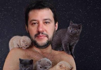 gattini (ANSA)