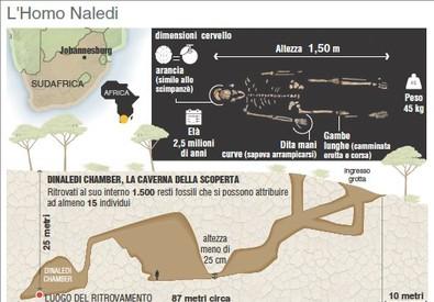 Scoperto in Africa un nuovo antenato dell'uomo, l'Homo Naledi (ANSA)