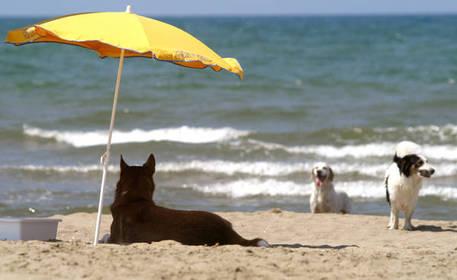 A rimini i cani possono fare il bagno emilia romagna ansa.it