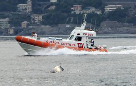 Sicilia, migranti: la Guardia Costiera salva 249 persone