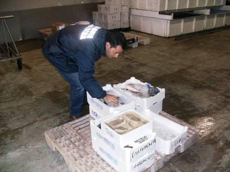 Genova, 2 tonnellate di pesce sequestrato dalla Capitaneria
