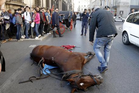 Cavallo 39 botticella 39 stramazza a terra davanti palazzo for Subito it lazio arredamento e casalinghi