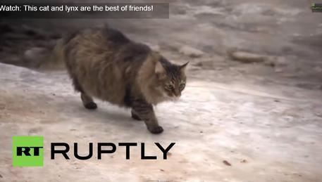Russia: gatta salva neonato abbandonato