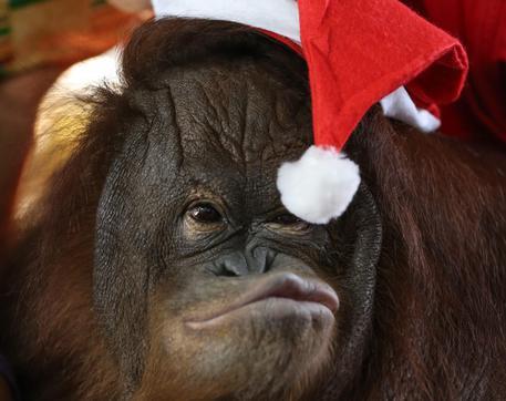 Immagini Animali Natale.Natale Per Gli Animali Dello Zoo Che Scartano I Regali