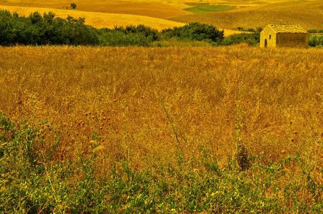 Agricoltura: a Borsa Merci Bologna primo listino cereali bio ...