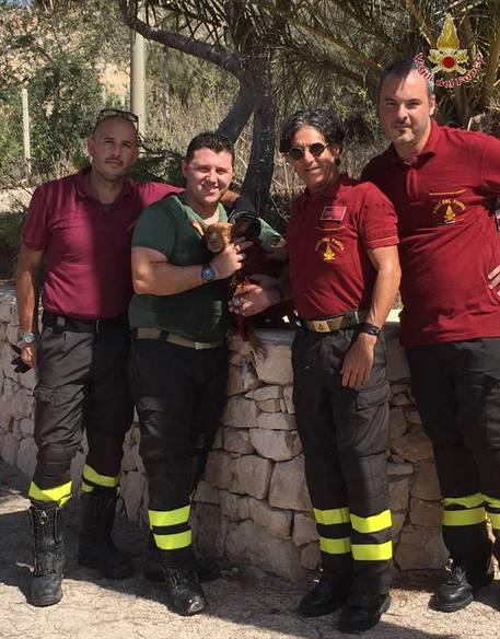 Lampedusa: VVF salvano cagnolino caduto in un pozzo