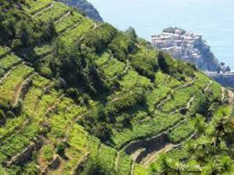 In Consiglio censimento terrazzamenti - Liguria - ANSA.it