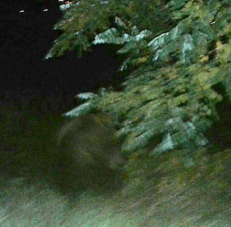 Abbateggio, avvistato un orso nel centro abitato
