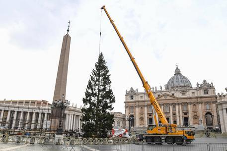 Piazza San Pietro, arrivato il celebre albero di Natale