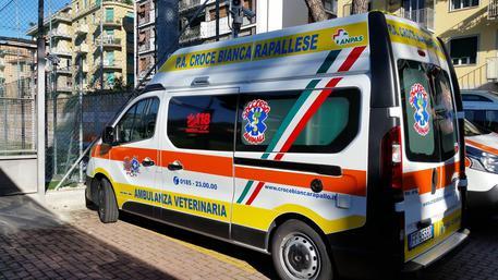 A Rapallo Ambulanza Dedicata A Animali Liguria Ansa It