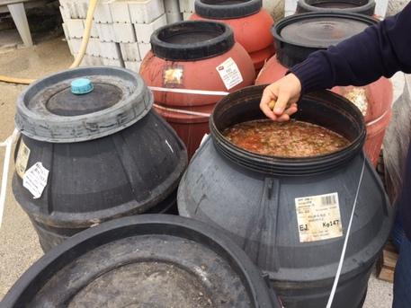 Diecimila chili di olive colorate chimicamente sequestrate in Puglia