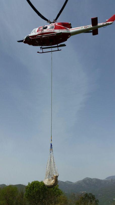 Elicottero Animale : Mucca in dirupo recuperata da elicottero molise ansa