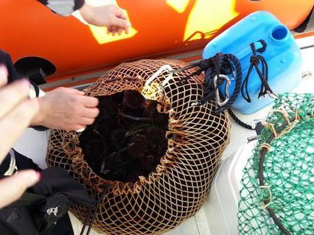 Pesca 2 kg di ricci, denunciato