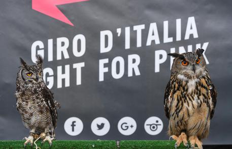 Giro d'Italia 2016, 7a Tappa: la Quiete prima della Tempesta