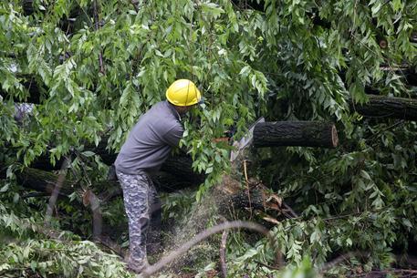 Maltempo a Mantova, albero cade su auto: morta una donna
